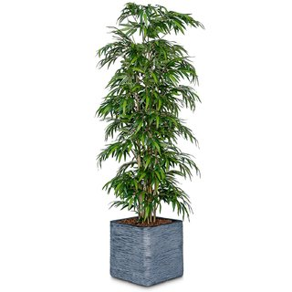 6ft Artificial Bamboo Mini Leaf Tree - Fire Retardant