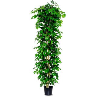 6ft Artificial Ficus Nitida Tree