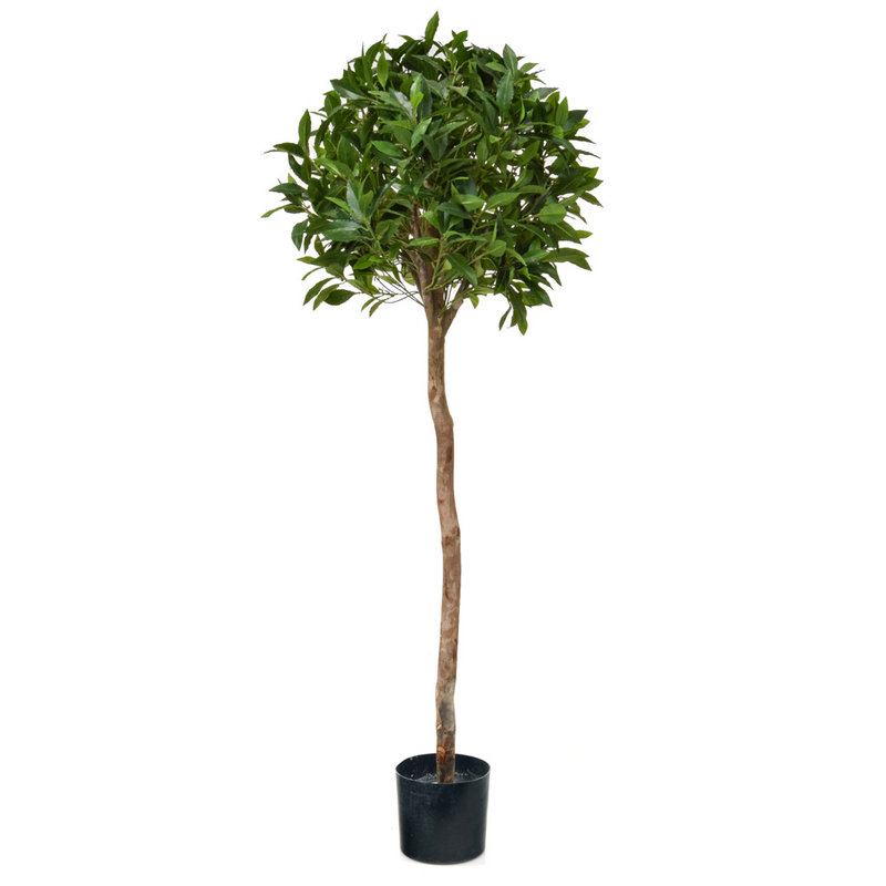 Artificial Bay Laurel Ball Tree 135cm with Natural Tree Trunk/