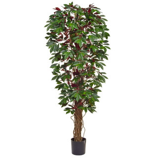 Artificial Capensia Deluxe Liana 180cm with Natural Tree Trunk (Fire Retardant)