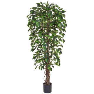 Artificial Ficus Liana Green 180cm with Natural Tree Trunk (Fire Retardant)