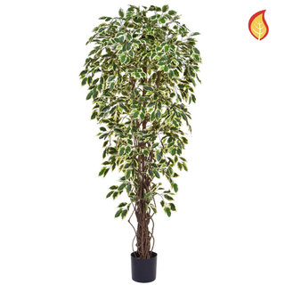 Artificial Ficus Liana Variegated 180cm with Natural Tree Trunk (Fire Retardant)