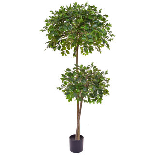 Artificial Ficus Retusa 180cm with Natural Tree Trunk