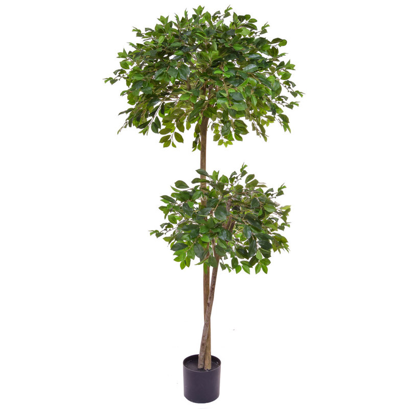 Artificial Ficus Retusa 180cm with Natural Tree Trunk/