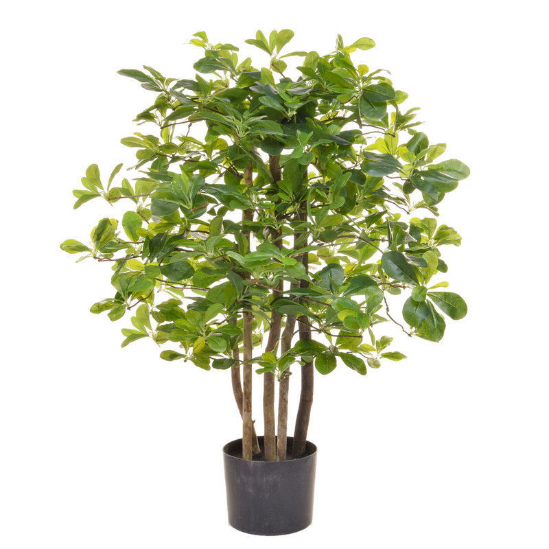Artificial Schefflera 90cm with Natural Tree Trunk/