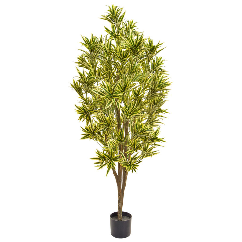 Artificial Dracaena Reflex 170cm with Natural Tree Trunk/