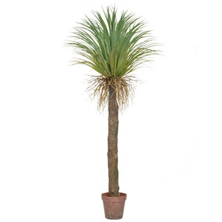 Artificial Cycas Palm in Brown Pot 180cm