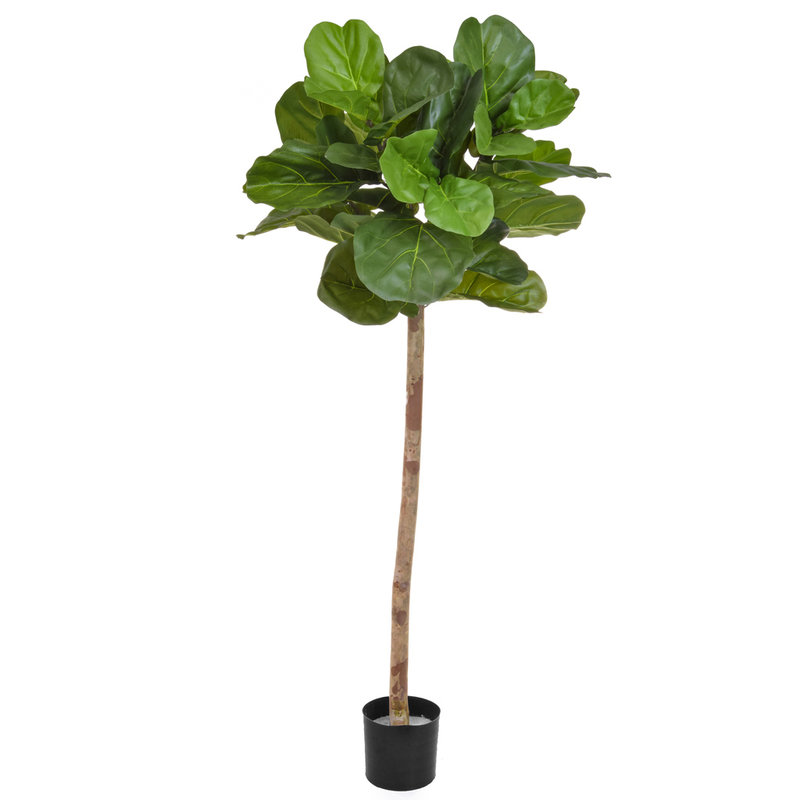 Artificial Fiddle Tree 170cm with Natural Tree Trunk/