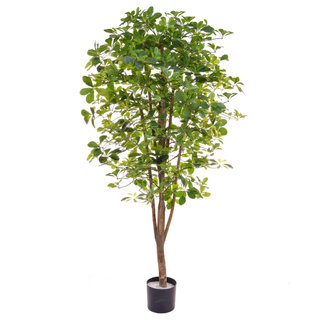 Artificial Schefflera 180cm with Natural Tree Trunk