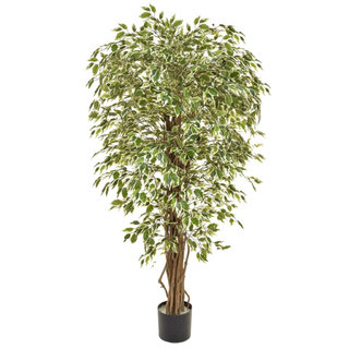 Artificial Ficus Liana Variegated 150cm with Natural Tree Trunk