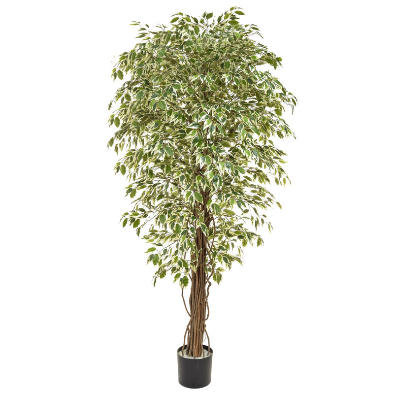 Artificial Ficus Liana Variegated 180cm with Natural Tree Trunk/