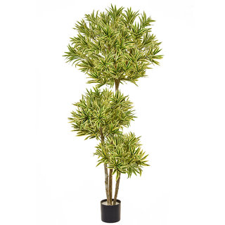 Artificial Dracaena Reflex Multi Layer 180cm with Natural Tree Trunk