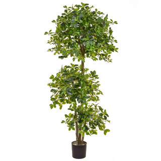 Artificial Schefflera Multi layer 180cm with Natural Tree Trunk