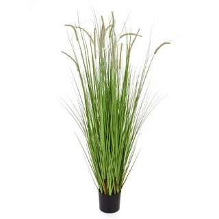 Artificial Dogtail Grass 180cm with Pot (Fire Retardant)