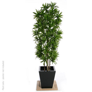 Artificial Dracaena Song of Jamaica 180cm with Natural Tree Trunk (Fire Retardant)